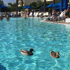 Even the ducks are living that #SGFUS life this afternoon. Getting a little tan to go with my tux tonight...