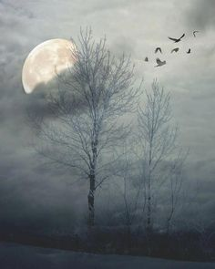 November Full Moon.....Snow Moon, Frost Moon, Mourning Moon, Tree Moon.