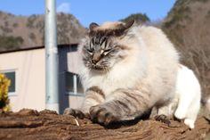 つめとぎのら - かご猫 Blog
