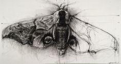 April Coppini - Hawk Moth // aprilcoppini.com