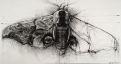 April Coppini - Hawk Moth // aprilcoppini.com