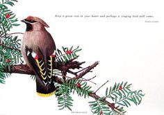 Small Bird Print Waxwing 1992 Vintage Book Page Bird