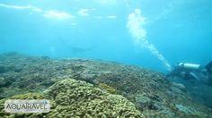 Potápění na Bali: manty a lidé / Diving Bali: mantas & divers
