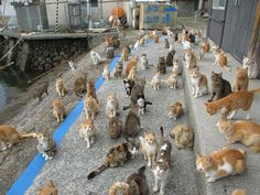 Aoshima, which is also known as Cat Island, is a tiny remote island in the Ehime Prefecture of southern Japan where cats outnumber humans 6 to Lina Medina, Cat Island Japan, Japan Cat, Cat Heaven, Lots Of Cats, Feral Cats, All About Cats, Cat Food, Cat Memes