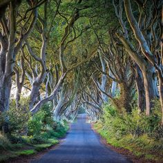 Planted in the 18th century by the Stuart family to impress visitors to their mansion this incredible row of interlocking beech trees has affectionately become known as The Dark Hedges. It's one of those photographer bucket list items when traveling in Northern Ireland. // photo by @jonathan_irish by natgeotravel