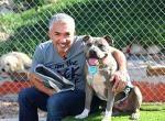 Cesar's dog training site
