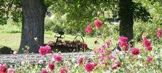 Wollam Gardens.  Photo: petalsinprose.blogspot