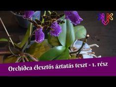 English Garden Design, Japanese Garden Design, Mediterranean Garden Design, Minimalist Garden, Public Garden, Terrace Garden, Garden Boxes, Landscaping Plants, Tropical Garden