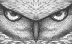 how to draw owl eyes, draw an owl face