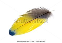 Isolated feathers St