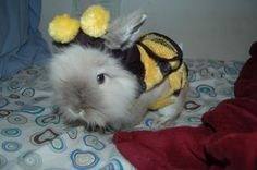 cute bunny bee