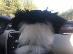 Looking out at the big sky country on the drive �� #drive #adventure #chevy #travel #pupper #puppy #dog #bordercollie http://tipsrazzi.com/ipost/1524322225171646253/?code=BUnevzSlsct