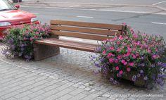 Penkki-istutuksia Hämeenkadulla. Kuva: Anja Koivunurmi-Niemelä