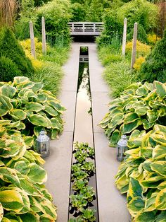 Love this linear water garden/reflecting pool. What a cool use of a narrow space.AND the Hostas,!