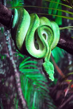 green python - green