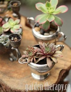 Dressing up vintage silver with cool succulents