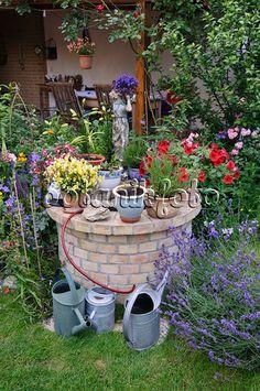473240 - Fuchsia (Fuchsia), Nemesia, petunia (Petunia), lobelia (Lobelia) and lavender (Lavandula) in a backyard garden