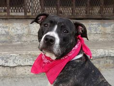 PUPPY ALERT! My name is CHLOE. My Animal ID # is A1004286. Please Share and Reshare to save my life.  DIES TODAY!  PLEASE RESHARE ONLY! PUPPY ALERT!