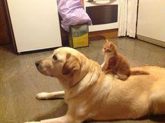 かわいすぎる猫と犬の仲良し画像 02 ねこLatte+