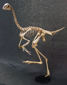 Image result for ostrich skeleton