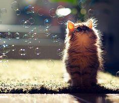 Daisy, Probably The World's Cutest Kitten
