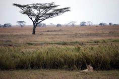 Las sabanas tropicales (praderas con árboles o arboledas dispersas) se encuentran en regiones cálidas con precipitación pluvial de entre 120 y 180 cm, pero con una o dos temporadas largas de sequía, cuando los incendios forman una parte importante del ambiente.