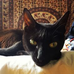 """ #gatopreto #blackcat #catsofinstagram #neko"""