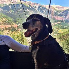 Gondola loves pups too