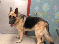 www.PetHarbor.com pet:LACO3.A4226833