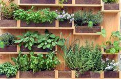 uma pequena estrutura para cultivar ervas aromática