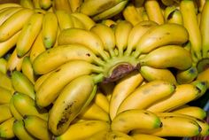 9 Untold Health Benefits Of Burro Bananas That Must Be Told To The Masses - Alkaline Valley Foods Burro Banana Recipe, Burritos, Boiled Egg Diet, Electric Foods, Alkaline Foods, Alkaline Recipes, Vegan Recipes, Banana Chips, Living A Healthy Life