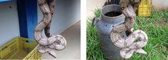 Uma cobra foi encontrada dentro de uma escola