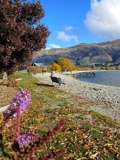6 reasons why you should visit Wanaka in New Zealand