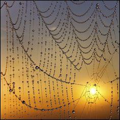 ro cobweb fotograf profesionist in Bucuresti Spider Art, Spider Webs, Spider Silk, Foto Macro, Itsy Bitsy Spider, Dew Drops, Rain Drops, Water Droplets, Macro Photography