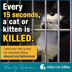 Want to be an advocate for cats? Share this post and let's end the senseless killing of cats in shelters! Rescue Dogs, Animal Rescue, Alley Cat Allies, Foster Cat, Cat Info, Pet Adoption, Animal Adoption, Outdoor Cats, Feral Cats