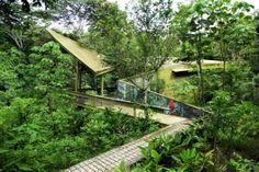 Centro de visitantes, selva de Panamá / ENSITU (2)