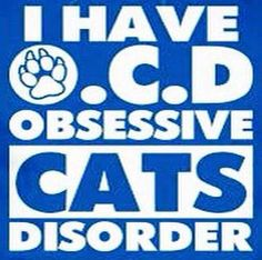 I LOVE my Kentucky Wildcats & I just LOVE cats in general, too. Lol :)