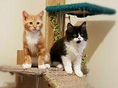 Feral rescue kittens!
