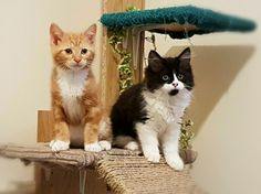 Ginger tabby and Baby omg cat! Feral rescue kittens! Up for adoption soon on rspca manchester/salford branch!