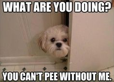 Attack Of The Funny Dogs – 60 Pics