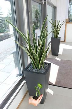 Easy and Fun Tips for Designing Your Indoor Garden living room - Having indoor plant decor may also House Plants Decor, Patio Plants, Indoor Planters, Outdoor Plants, Outdoor Gardens, Living Room Plants Decor, Large Outdoor Planters, Plants Indoor, Indoor Gardening
