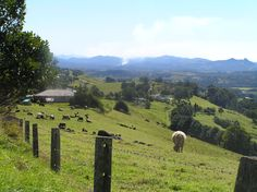 View to Mt Chincogan near Bangalow, NSW Byron Bay, Dream Life, Countryside, The Good Place, Beautiful Places, Scenery, Coast, Relax, St Helena