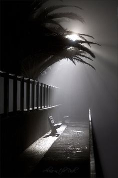 Great imagery for a film noir set. Photo D Art, Photo B, Alone In The Dark, Light In The Dark, Night Photography, Street Photography, Moonlight Photography, Face Photography, Amazing Photography