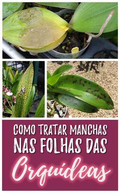 Como tratar manchas nas folhas das Orquídeas - Jardineiro.net Orquideas Cymbidium, Creative Landscape, Orchid Care, Diy For Teens, Easy Diy Projects, Bonsai, Planting Flowers, Woodworking Projects, Orchids