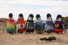 """Hand-knit penguin sweaters overwhelm wildlife charity ─ """"We are overwhelmed with offers of little penguin jumpers from across the world and sincerely appreciate the generosity of knitters wanting to help out little penguins,"""" reads a recent update on The Penguin Foundation's website. """"Please know that we do not urgently require little penguin jumpers for rehabilitation, we have a good supply of these which we use on any rescued oiled penguins and in the event of an oil spill."""""""