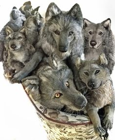 133 Best Realistic Stuffed Dogs Wolves And Other Animals Images