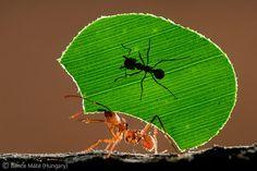 Pincha en la imagen y descubre los ganadores del Wildlife Photographer of the Year 2011
