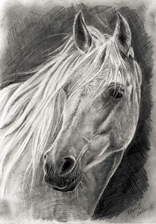 Like horse horse pencil drawing, pencil drawing tutorials, pencil art Horse Pencil Drawing, Horse Drawings, Animal Drawings, Pencil Drawings, Art Drawings, Pencil Art, Amazing Drawings, Beautiful Drawings, Horse Sketch