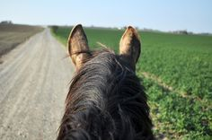 (9) Tumblr The Road Not Taken, Horse Ears, Happy Trails, Nice View, Ponies, Adventure, World, People, Animals