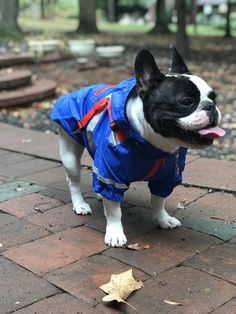 FrenchiEssentials — Shop for French bulldogs clothes 6e0d483fd